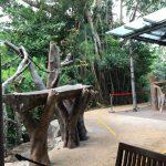シンガポール動物園でオラウータンと触れ合う-その1-